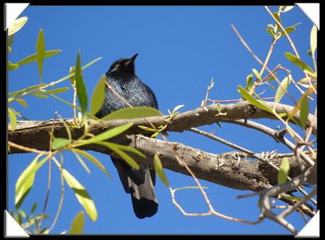 belle photos d'oiseau