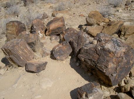 foret petrifiee namibie