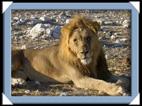 etosha parc Namibie