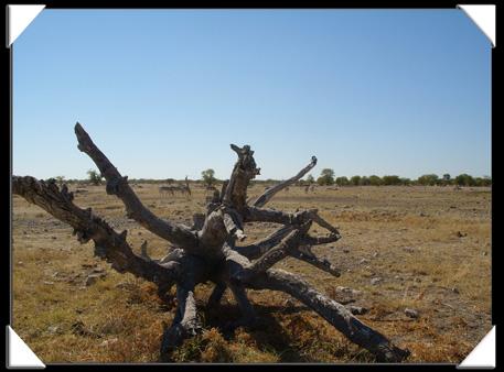 paysage namibien