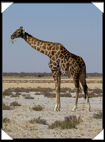 girage