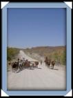 troupeau himba Namibie