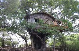 Marc's Treehouse Lodge