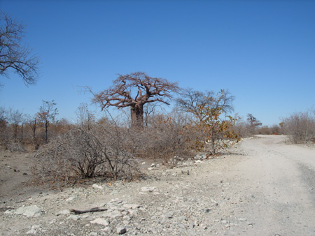 Piste Planet Baobab