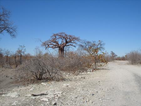 trail Planet Baobab