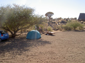 quivertree forest camp