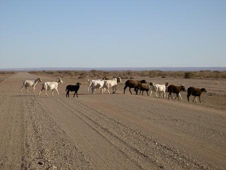 trail 98 in namibia