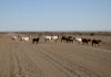 route 98 entre tses et berseba en namibie