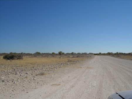 trail etosha
