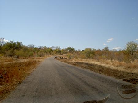 route Kazungula - Victoria Falls