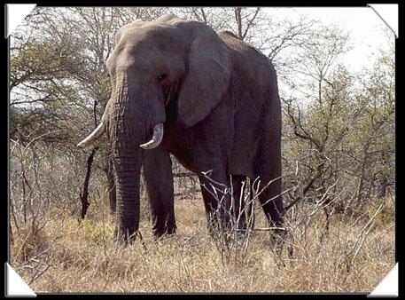elephant parc kruger
