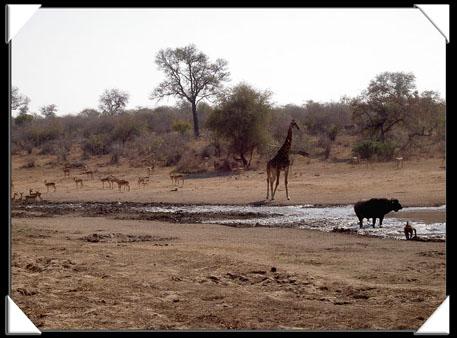 animaux au parc kruger
