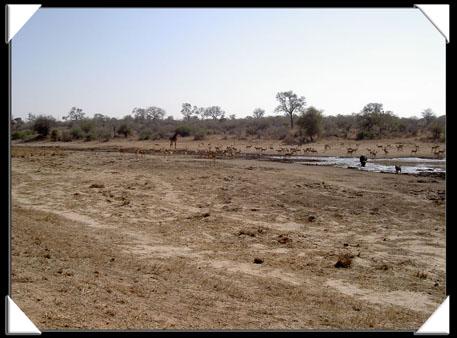 point d'eau au parc kruger