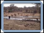 photos Kruger Afrique du sud
