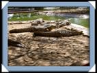 photo otjiwarongo crocodile ranch acacia park Namibie