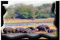 photos Kruger National Park afrique du sud