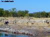 springbok namibia