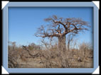 photo planet baobab