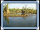 photo shakawe drotsky's cabins okavango botswana