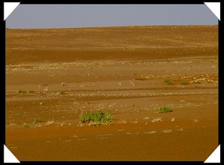 antilope desert