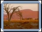 desert dune namib Namibie
